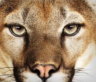 Apple confirms: Mountain Lion ships today