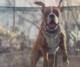 How MPC created Buster the Boxer for the John Lewis Chrismas ad