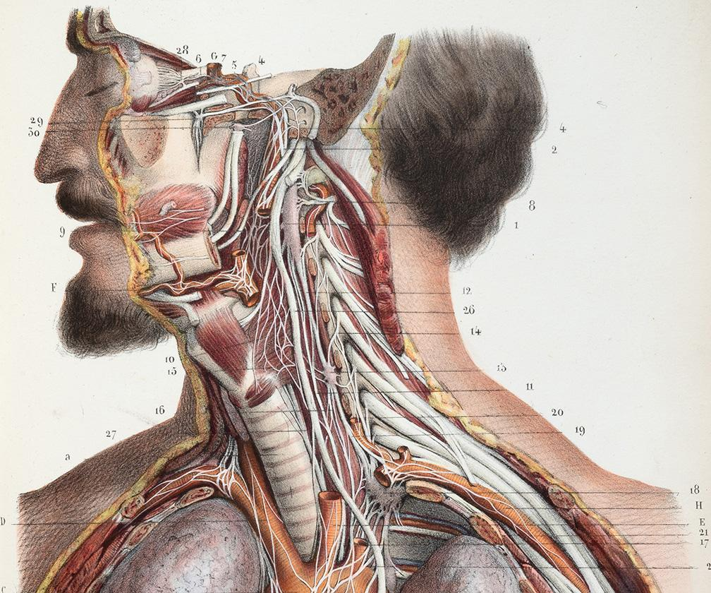 What 500 years of medical illustration has taught us about art and anatomy