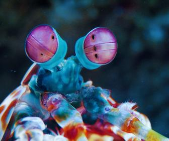 How Animals See Colour is Crazy, Beautiful and Inspiring